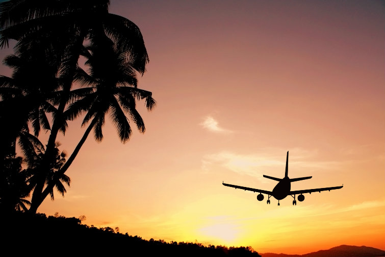 Fly i solnedgang. foto.