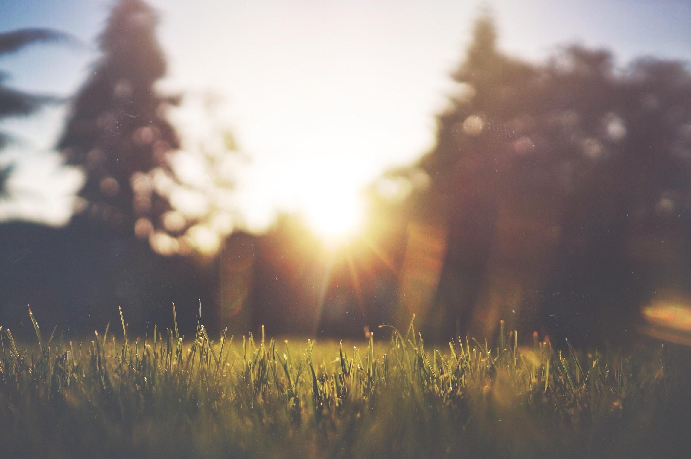 Sol og gress
